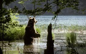 plitvice bear